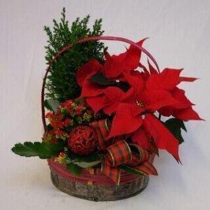 Joulukori perinteinen 2