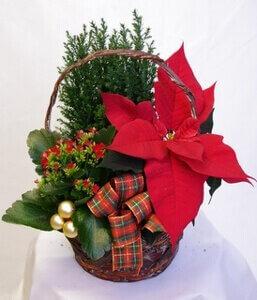 Joulukori punaisilla kukilla 52